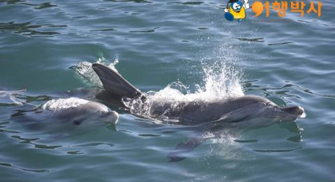 Dolphins at Jervis Bay, South Coast, New South Wales