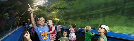 수족관에서 해양 생물을 구경 중인 어린이들
