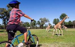 타롱가 웨스턴 플레인 동물원(Taronga Western Plains Zoo), 더보(Dubbo)